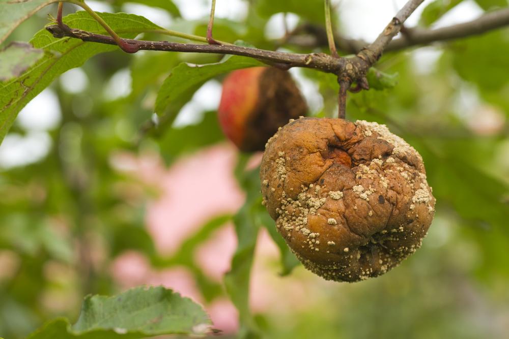 Reconsidera el Tribunal Supremo decisión sobre doctrina del fruto del árbol ponzoñoso