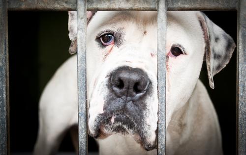 FBI perseguirá a abusadores de animales: Categoriza abuso animal como un delito de Grupo A