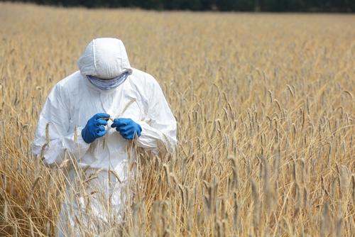 Rotulación de alimentos genéticamente modificados y su relación con la salud y la agricultura