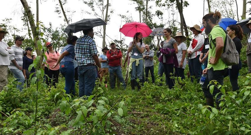 Agroforestería como estrategia de adaptación al cambio climático en fincas agrícolas de Puerto Rico