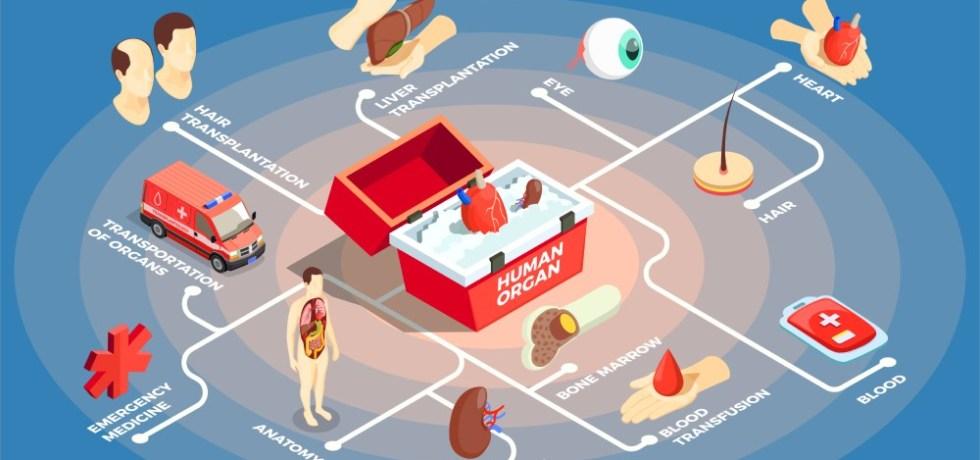 donación de órganos - organ donation
