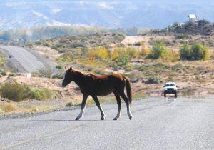 caballo-ruta