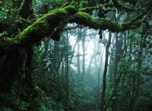 bosque forestal