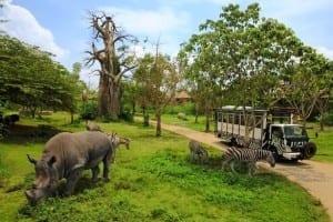 Nikmati Paket Wisata Bali ke Kebun Binatang