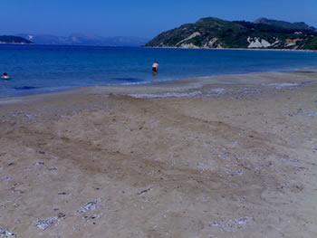 Tracce lasciate sulla sabbia da una tartaruga venuta a riva per deporre le uova