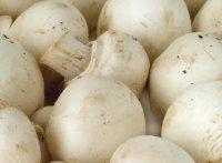 грибы выращивание