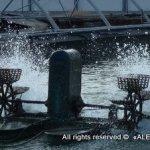 Израильские фермеры рыбного хозяйства обучат бразильцев выращивать тиляпию