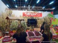 AgroMashov 2015. Международная сельскохозяйственная выставка.