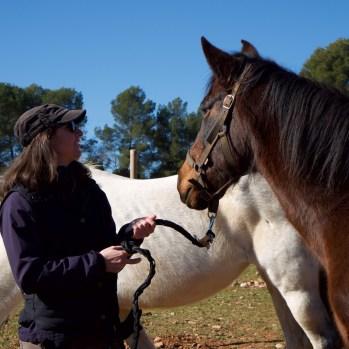 Marzo - Gracias caballos por acompañarme en mi proceso de definir camino y marcar límites con amor