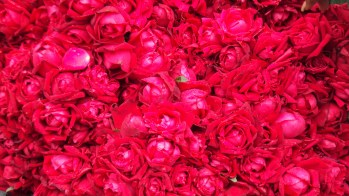 Flower inspiration, Pune, India.