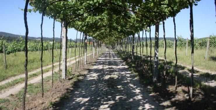 CVRVV promove formações sobre plantação e fertilização da vinha