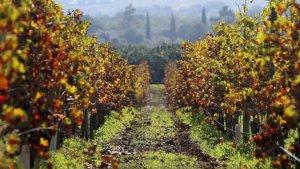 Produção vinícola aumenta 10% e exportações sobem 7,5% em 2017