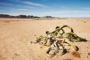 Deserto do Namibe