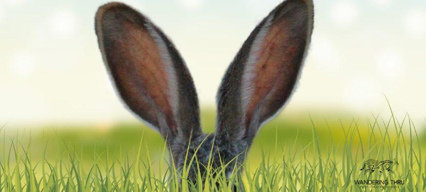 An unfortunate Easter