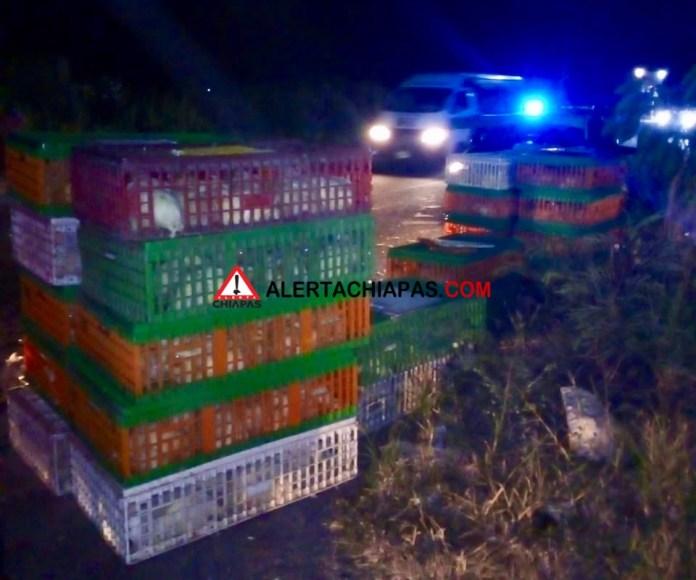 Decenas de pollos muertos por volcadura en la carretera a Emiliano Zapata img 7914