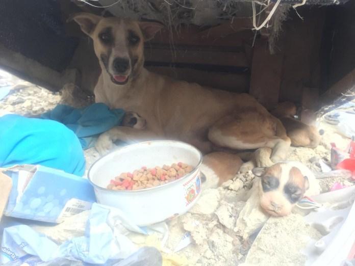 Mascotas, los más vulnerados en los desalojos del Mocri; activistas les buscan hogar 494d5601 ff37 45b4 ab38 5a6e7111bddb