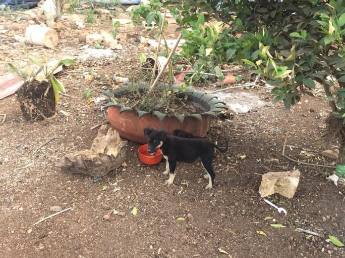 Mascotas, los más vulnerados en los desalojos del Mocri; activistas les buscan hogar c19635c6 45b3 40b3 be6a c35dba3b35f2