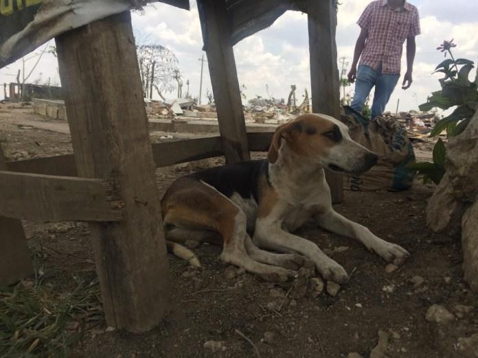 Mascotas, los más vulnerados en los desalojos del Mocri; activistas les buscan hogar e7ba2859 9050 4650 afb6 0cc8099f23b6
