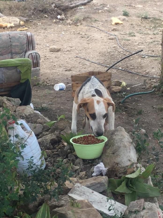 Mascotas, los más vulnerados en los desalojos del Mocri; activistas les buscan hogar f8cd5a88 c01b 47ef 9374 9a02ebaf9ad6