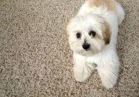 Alert Disaster RestorationDog-on-carpet - Alert Disaster ...