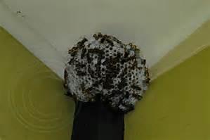 Black Wasp Joplin MO