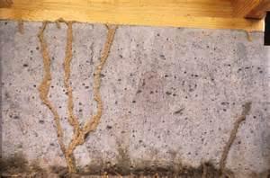 Termite Shelter Tubes Joplin MO
