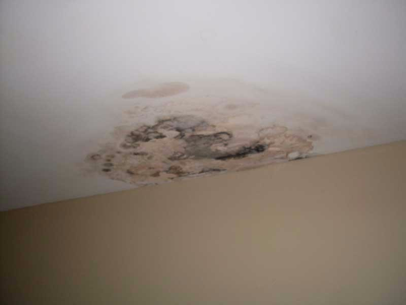 Expert Mold Remediation in Oakville and Mississauga