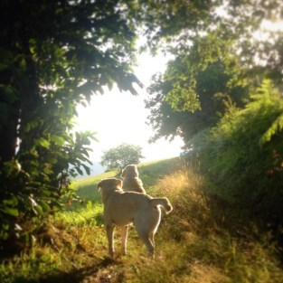 perros por bosque en Asturias vida con perros slow life