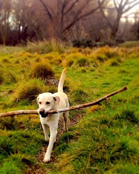 Campo en Segovia vida con perros slow life