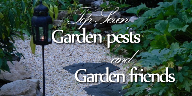 top seven garden pests and friends