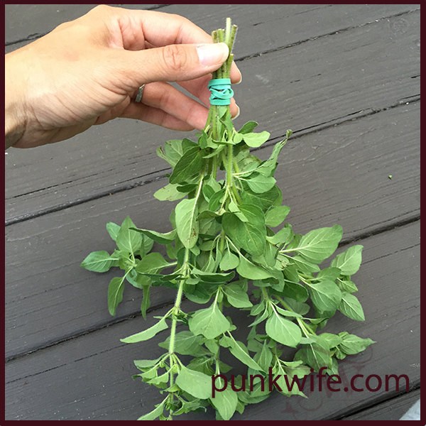 how to dry fresh oregano