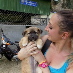Puppy - Cambogia
