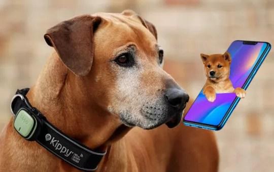E se il tuo cane avesse un gadget del genere?