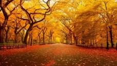 Central-Park-New-York-Autumn-485x728-628x356