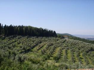 oliveti_calenzano di sailko su wikipedia