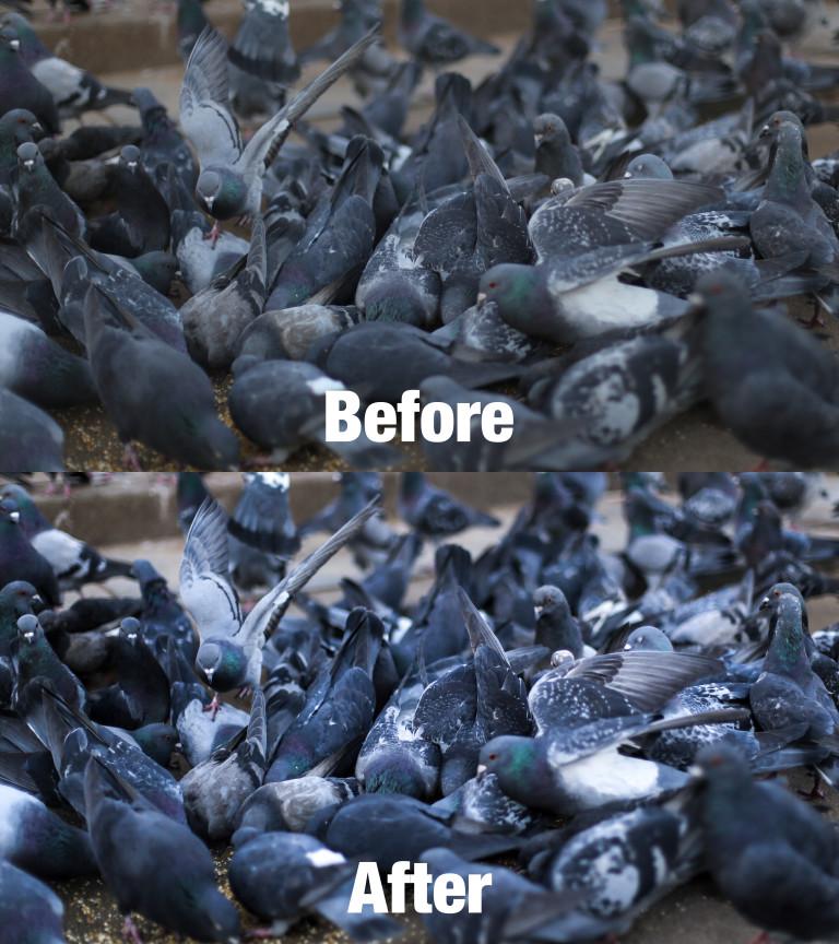 Pigeons Lightroom Preset