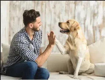 Patto con il cane. pipì in casa una delle regole da insegnare