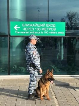 i cani da lavoro seguono una guida definito alpha in altri tempi