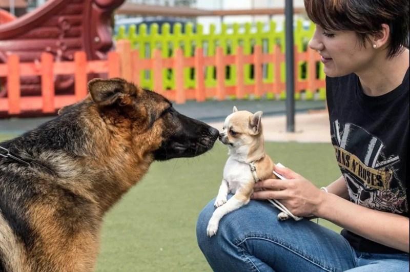 La socializzazione questa importantissima fase della crescita del cucciolo