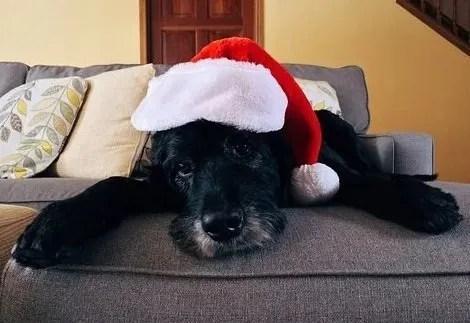 Cane e Natale