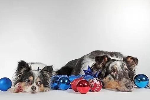 Ragalo di Natale per cane?