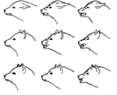 Per parlare con il nostro cane dobbiamo conoscere il significato della postura delle orecchie