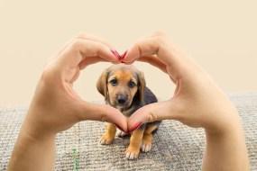 il cane ci ama?