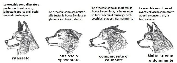 Il linguaggio del corpo del cane