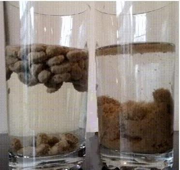 paragone bicchiere con acqua crocchette estruse e pressati a freddo