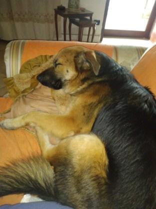 Il cane cozza, quello che deve starti spesso appiccicato addosso