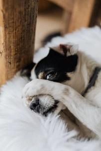 Perchè il cane fa la pipì a letto o sul divano?