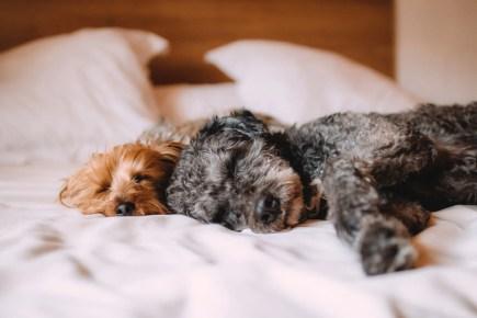 Problema pipì. Com'è composta la famiglia del cane che fa la pipì in casa dove non dovrebbe?