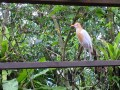 Ausflug Bird Park Kuala Lumpur