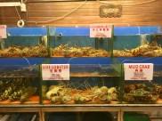 Lobster, Crab & Co Fresh Seafood Restaurants Langkawi Malaysia